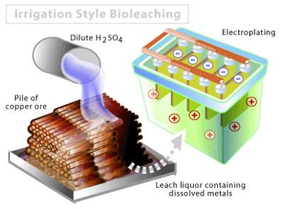 microbminingbioleach.jpg