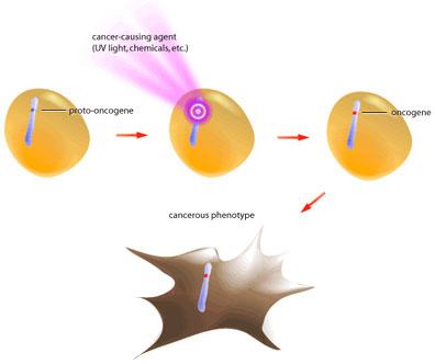 oncogene-formation.jpg